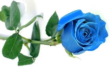 Le langage et la signification des roses - Bouquet de roses signification ...