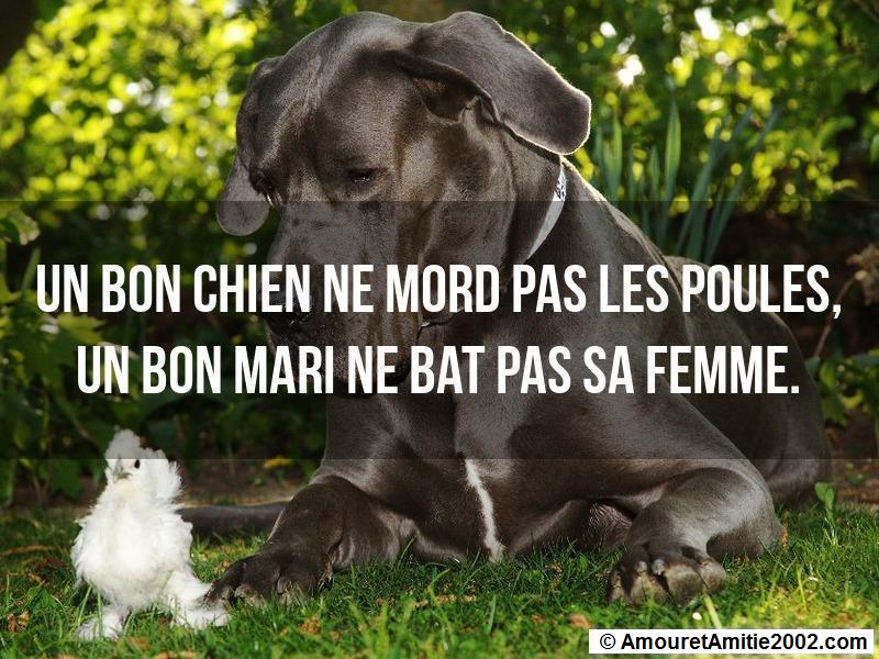 proverbe d'amour 164