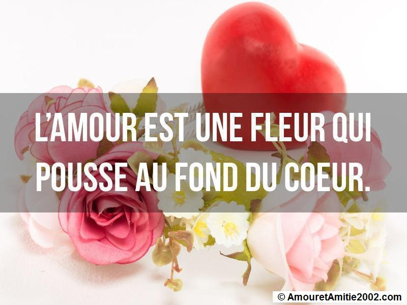 proverbe d'amour 244