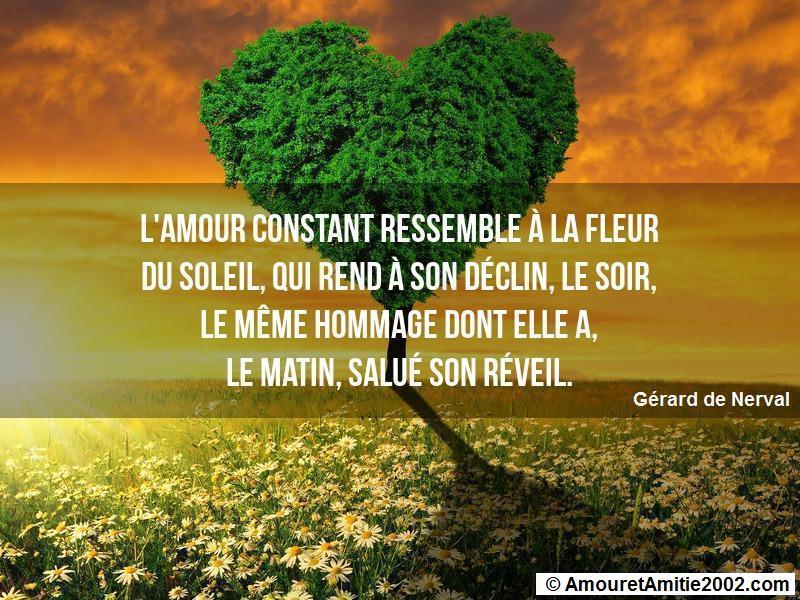 Proverbe Amour Lamour Constant Ressemble à La Fleur Du Soleil