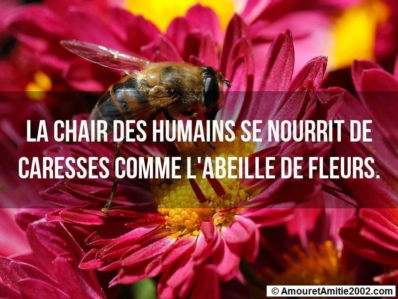 proverbe d'amour 48